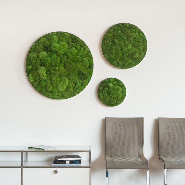 Wandbegr nung pflanzenwand mooswand pflanzenbilder for Raumgestaltung zug