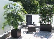Areca Palme und Bambus