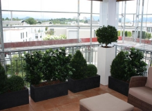 Aussenbegrünung mit wetterfesten Kunstpflanzen