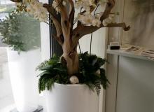 Ghostwood mit Orchideen