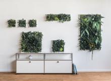 Pflanzenbilder ohne Pflege