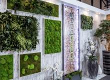 Konservierte Moos und Pflanzenbilder