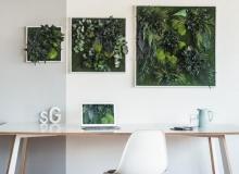 Pflanzenbilder-Vertikalbegrünung