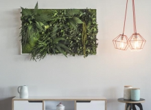 Pflanzenbilder-Wandbegrünung