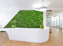 Pflanzenwand-Mooswand