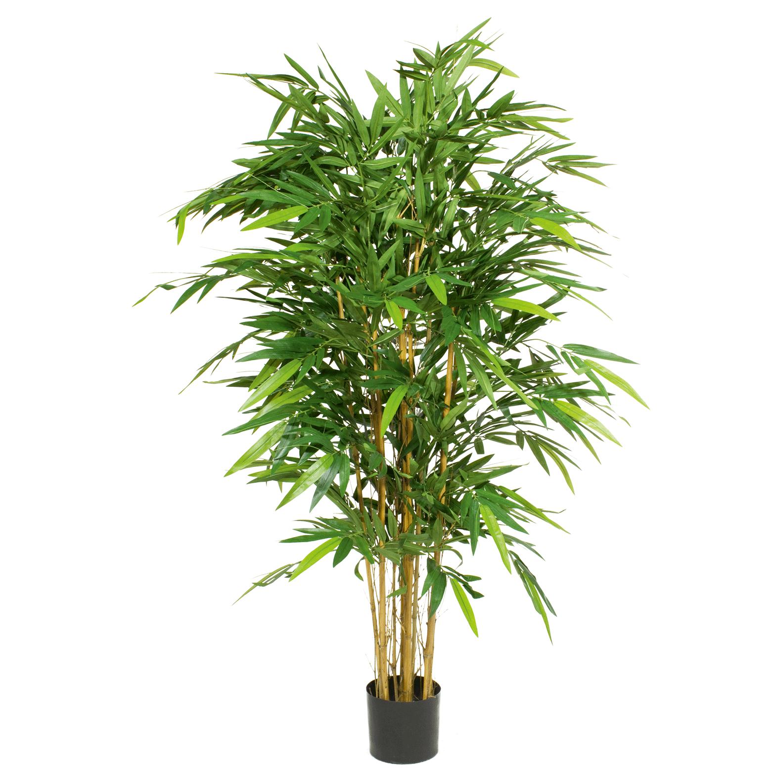 Bambus deluxe dekohaus raumgestaltung und objektbegr nung for Raumgestaltung pflanzen