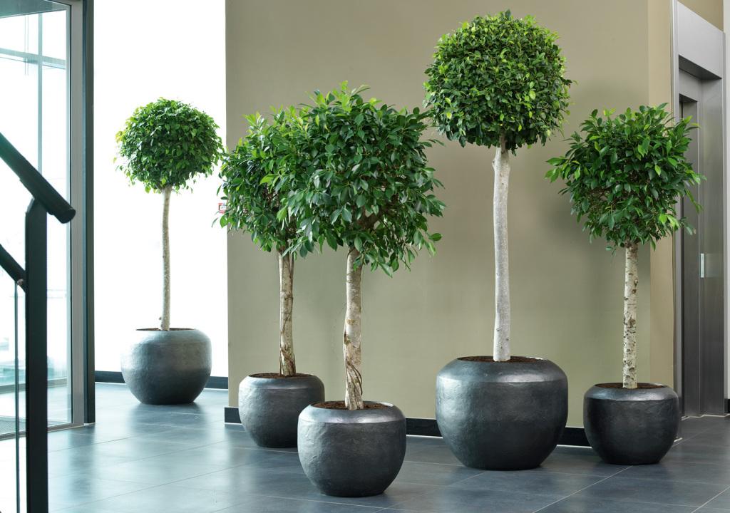 dekohaus innenbegr nung und aussenbegr nung mit exklusiven kunstpflanzen. Black Bedroom Furniture Sets. Home Design Ideas
