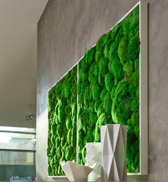 stylegreen kugelmoosbild 80x80cm dekohaus raumgestaltung und objektbegr nung. Black Bedroom Furniture Sets. Home Design Ideas