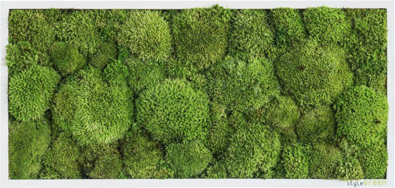 stylegreen kugelmoosbild 27x57cm dekohaus innenbegr nung und aussenbegr nung mit. Black Bedroom Furniture Sets. Home Design Ideas