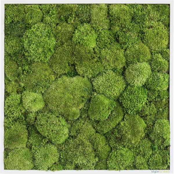stylegreen kugelmoosbild 55x55cm dekohaus innenbegr nung und aussenbegr nung mit. Black Bedroom Furniture Sets. Home Design Ideas