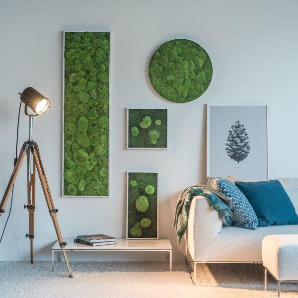 Moos- & Pflanzenbilder