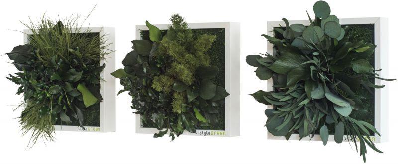 stylegreen pflanzenbild 22x22cm 3er set dekohaus innenbegr nung und aussenbegr nung mit. Black Bedroom Furniture Sets. Home Design Ideas