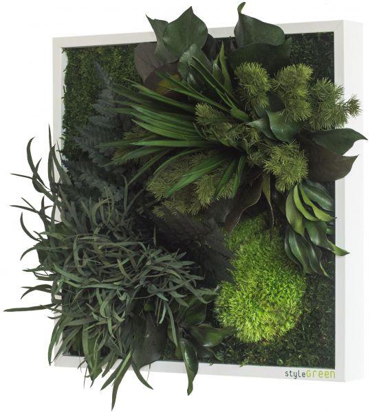 stylegreen pflanzenbild 35x35cm dekohaus innenbegr nung und aussenbegr nung mit exklusiven. Black Bedroom Furniture Sets. Home Design Ideas