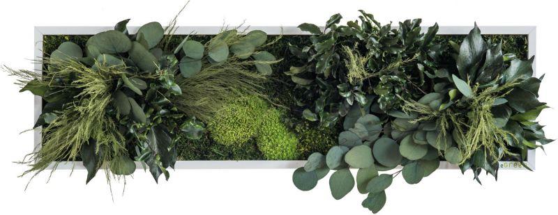 stylegreen pflanzenbild 70x20cm dekohaus innenbegr nung und aussenbegr nung mit exklusiven. Black Bedroom Furniture Sets. Home Design Ideas