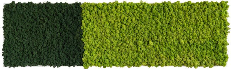 stylegreen islandmoosbild 140x40cm dekohaus innenbegr nung und aussenbegr nung mit. Black Bedroom Furniture Sets. Home Design Ideas