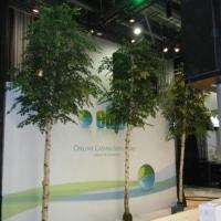 Grosse Birkenbäume künstlich als Innebegrünung einer Messe.