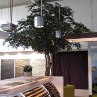 Innenraumbegrünung eines Geschäfts mit einem grossen Black Olive Kunstbaum.