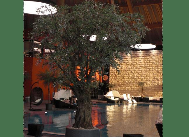 Künstlicher Olivenbaum als Innenbegrünung eines Schwimmbades.