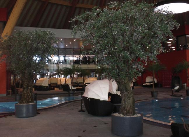 Künstliche Olivenbäume als Innendekoration einer Wellness Anlage.