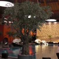 Grosser Olive Kunstbaum als Innenbegrünung eines Schwimmbad.