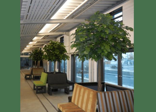 Sitzplatzgestaltung mit grossen Linde Kunstbäume.