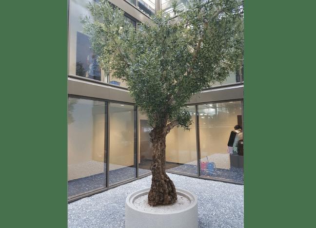 Innenraumbegrünung mit einem künstlichen, grossen Olivenbaum, der in einem Hotel in einem Atrium steht.