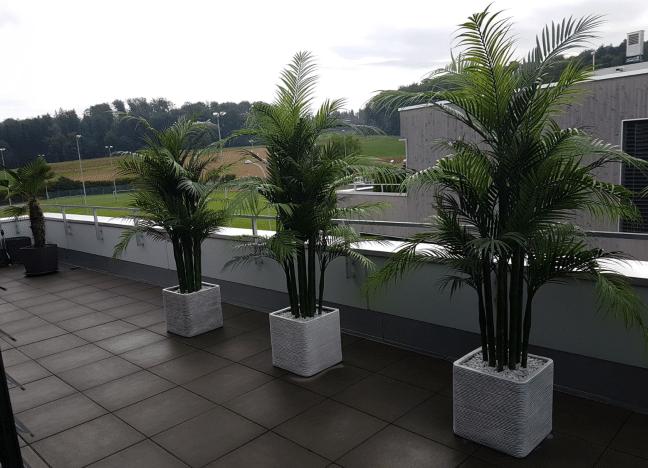 Areca Palme Wetterfest Premium Kunstpflanzen Dekohaus Ag