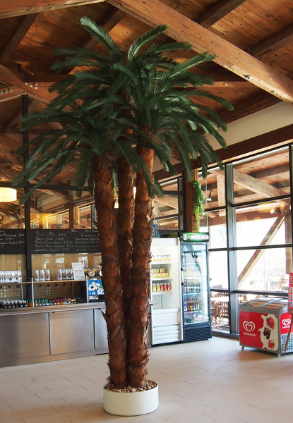Wetterfeste Cycas Palme Premium Kunstpflanzen Dekohaus Ag