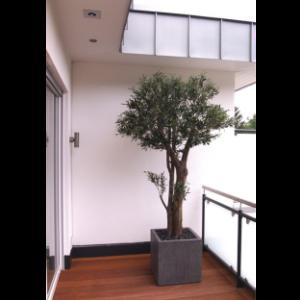 olivenbaum uv dekohaus innenbegr nung und aussenbegr nung mit exklusiven kunstpflanzen. Black Bedroom Furniture Sets. Home Design Ideas