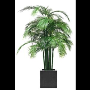 wetterfeste areca palme premium kunstpflanzen dekohaus ag. Black Bedroom Furniture Sets. Home Design Ideas