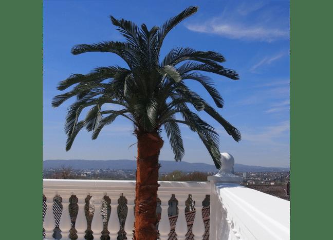 wetterfeste cycas palme wetterfeste kunstpflanzen premium qualit t. Black Bedroom Furniture Sets. Home Design Ideas