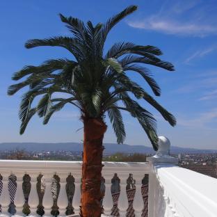 Wetterfeste Cycas Kunstpalme auf Balkon.