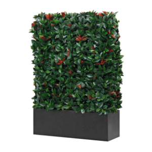 wetterfeste photinia hecke dekohaus innenbegr nung und aussenbegr nung mit exklusiven. Black Bedroom Furniture Sets. Home Design Ideas