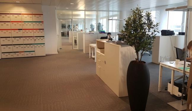 Bürobegrünung mit hochwertige Kunstbäume in schwarzen Pflanztopf.