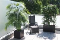 Terrasse mit Areca Palme und Bambus Hecke.