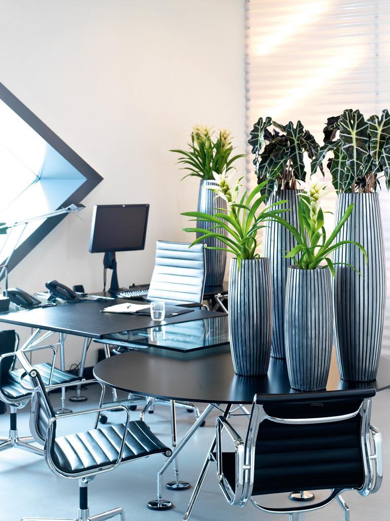Bürobegrünung mit Pflanzen in Vasen.