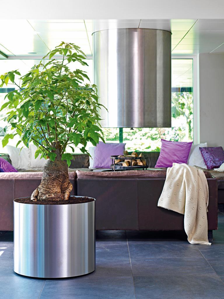 Raumbegrünung mit Edelstahl Gefäss und PFlanze in einem Wohnzimmer.