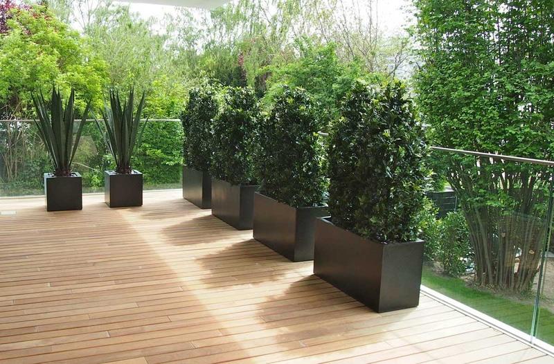 Terrassengestaltung mit Ilex Hecken und Agaven.
