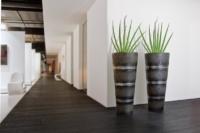 Innebegrünung mit Pflanzen in edlen Gefässe.