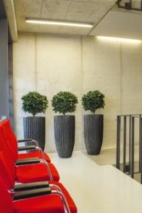 Innenraumbegrünung mit schönen Gefässe und Pflanzen.