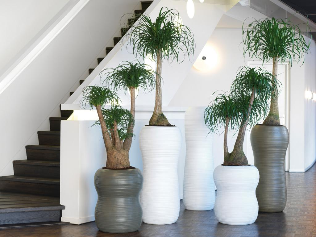 Innenraumbegrünung mit Töpfen und Pflanzen.