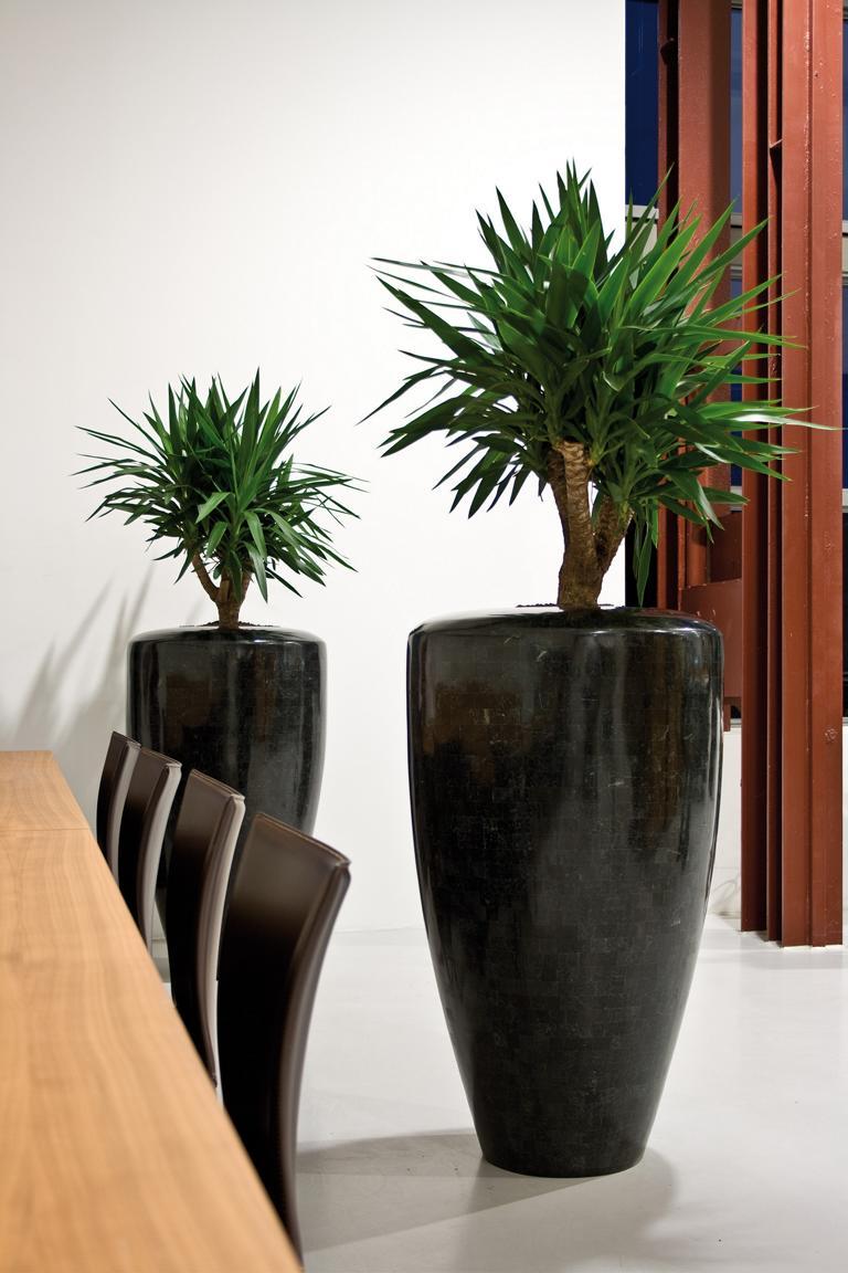 Innenraumbegrünung mit Pflanzen in Töpfe.