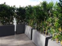 Sichtschutzlösung mit Bambus Hecken auf einem Balkon.