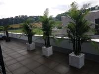 Wetterfeste Areca Kunstpalmen draussen auf einer Terrasse.
