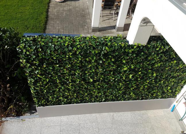 Terrassengestaltung mit winterharter Efeu Hecke als Sichtschutz zum Nachbarn.