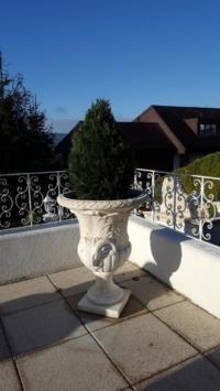 Wetterfeste Zypresse auf Balkon.