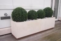 Wetterfeste Buchskugeln in Pflanzengefäss auf Balkon.