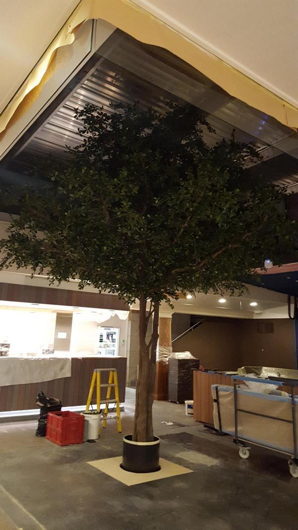 Innenbegrünung eines Restaurants mit einem grossen Black Olive Kunstbaum.