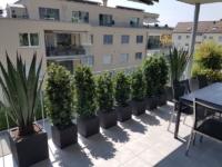 Terrassengestaltung mit Ilex Hecken und Agaven als Dekoration und Sichtschutz.