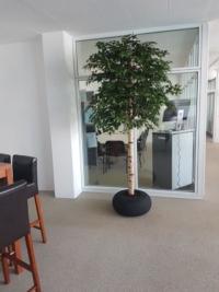 Künstliche Birke massgefertigt als Begrünung Indoor in einem Büro.
